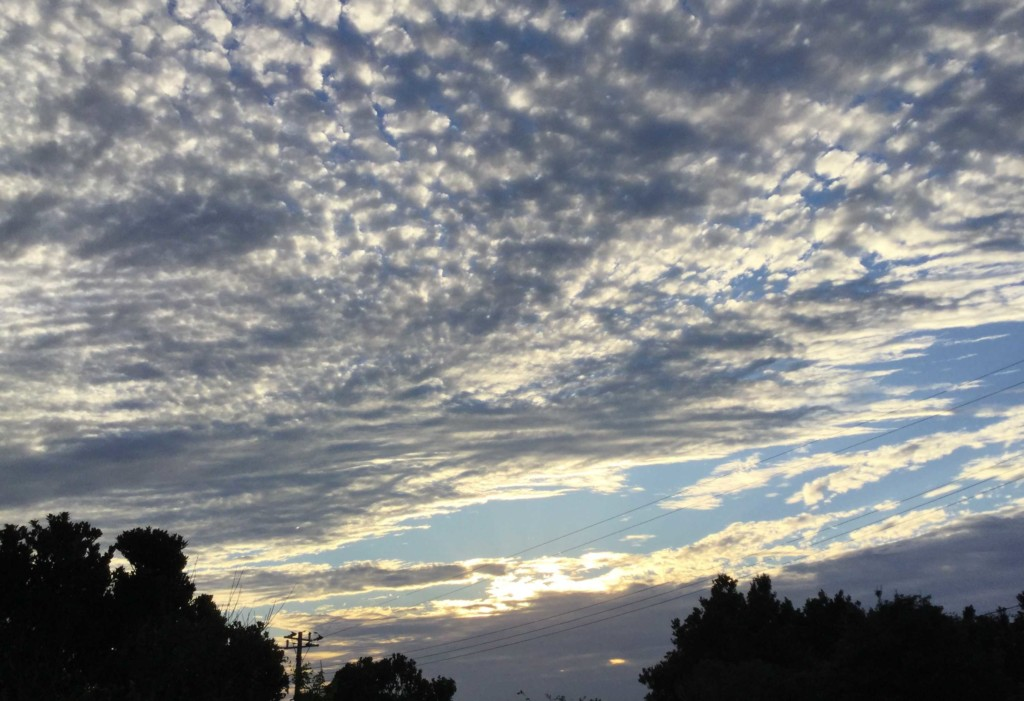 IMG 3020 1 1024x701 - 女心と秋の空